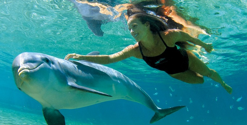 Woman swimming with dolphin in Cancun
