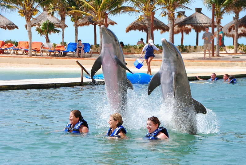 Swim with dolphins in Cancun