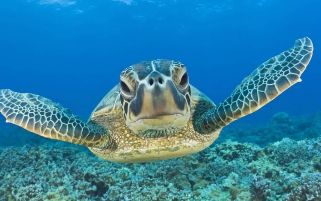 Turtle on Akumal Beach