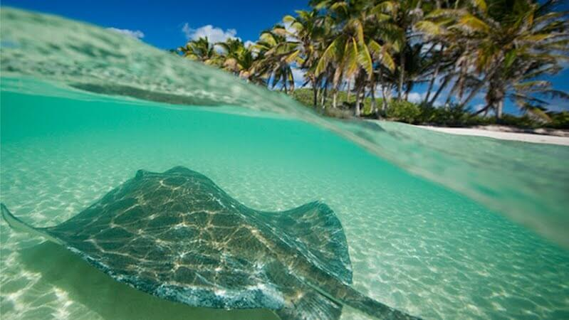 Sea on Isla Contoy in Cancun