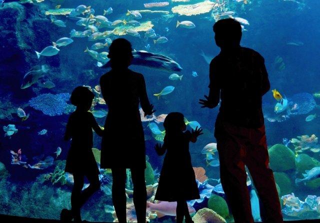 Inbursa Aquarium in Mexico City