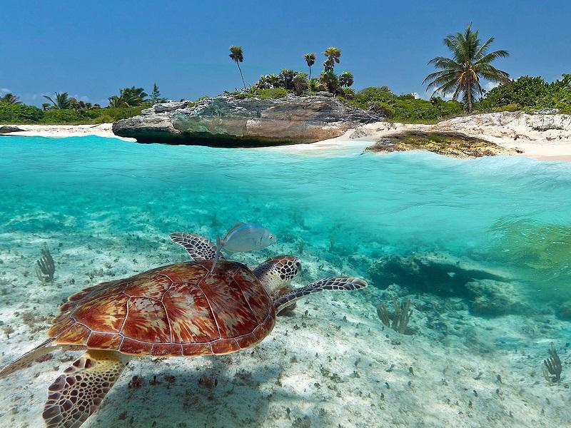 Akumal Beach in Riviera Maya
