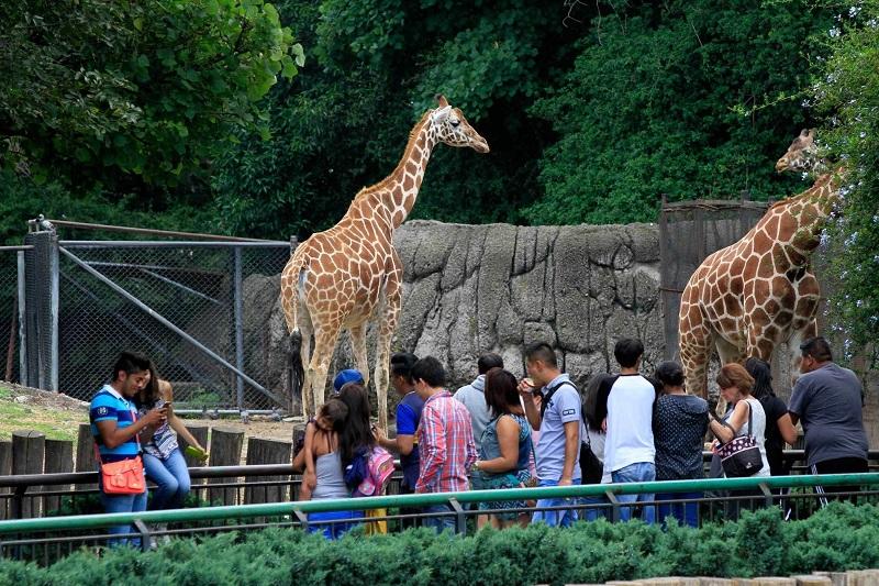 Chapultepec Zoo in Mexico City