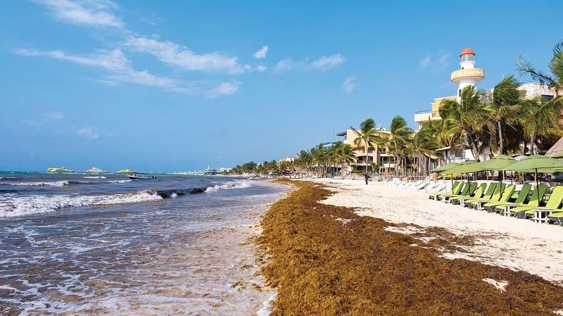 Seaweed on the beach in Cancun